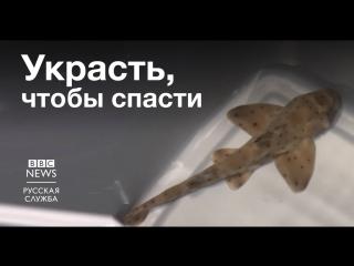 Благими намерениями вымощена дорога к акуле