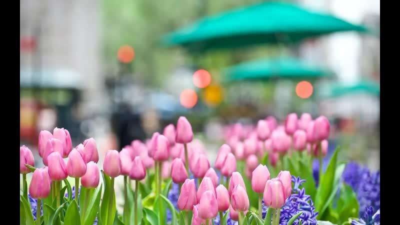 Весна приди 💐☀️🌷 Команда Молодежки ОНФ очень ждёт весну 🕊️ Смотрим до конца 😎🦋