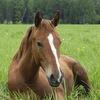 "Конюшня-приют для лошадей ""Шанс на жизнь"""