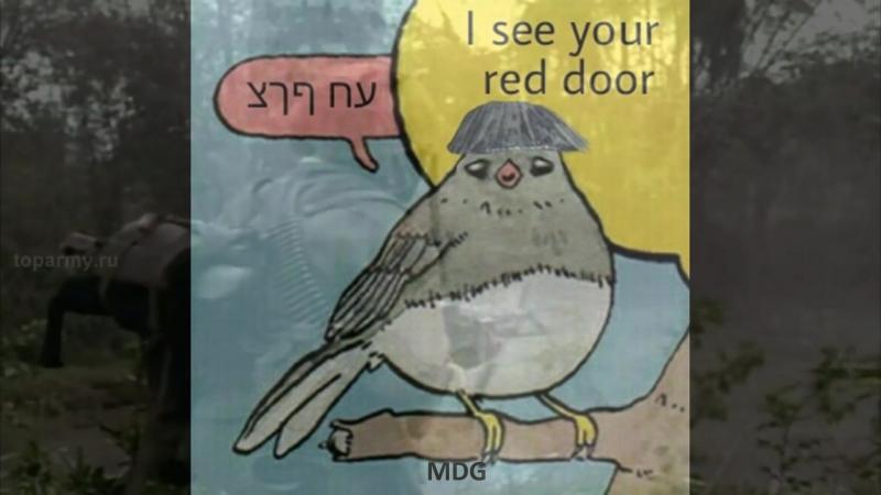 Paint it bird.mp4