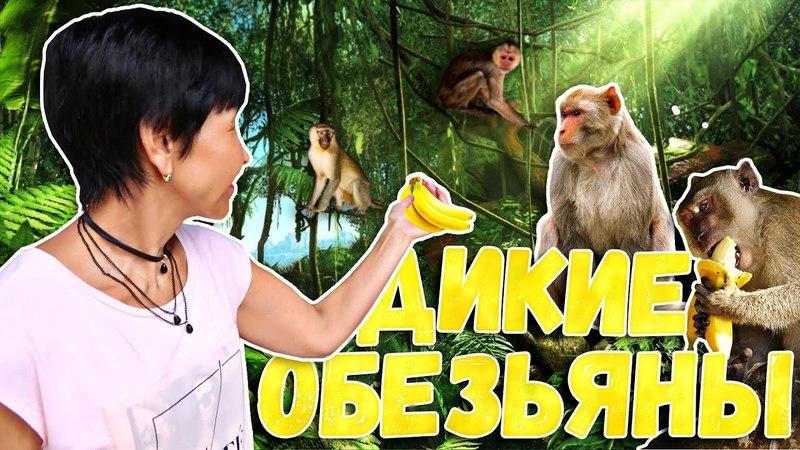 Гора ДИКИХ ОБЕЗЬЯН 🐒   Дегустация УСТРИЦ   Тайланд 🌴
