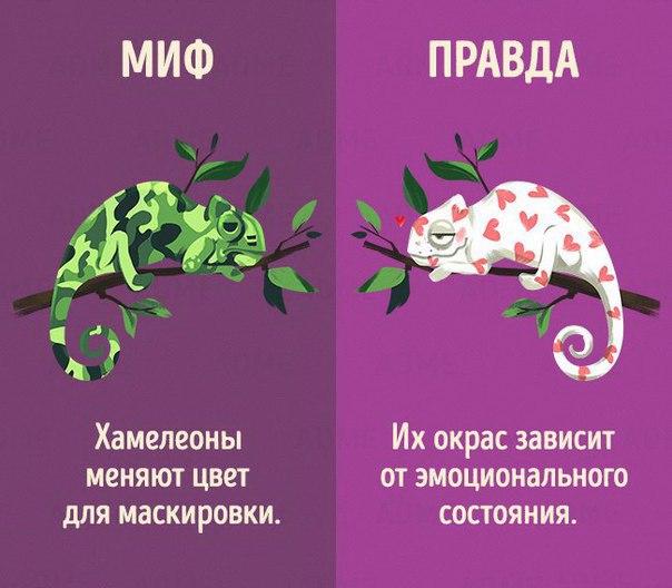 https://pp.vk.me/c615830/v615830306/1641b/MoDANaABhEA.jpg