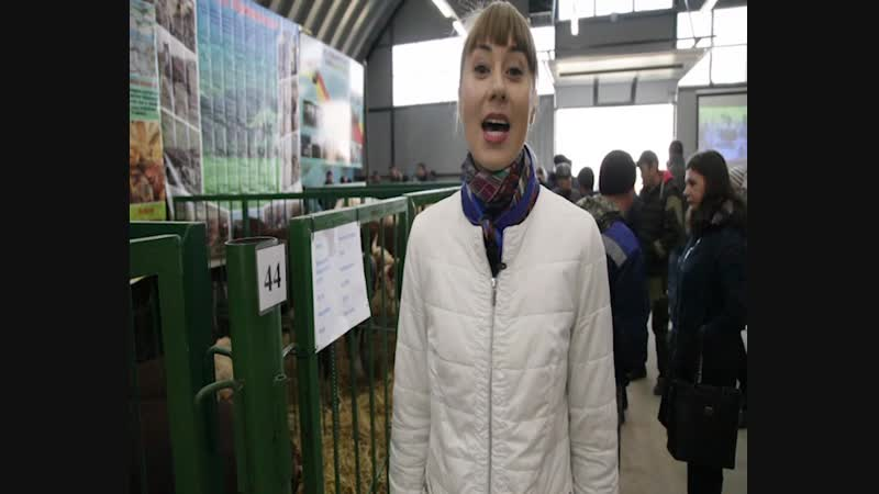 В Улан-Удэ состоялась выставка племенного животноводства