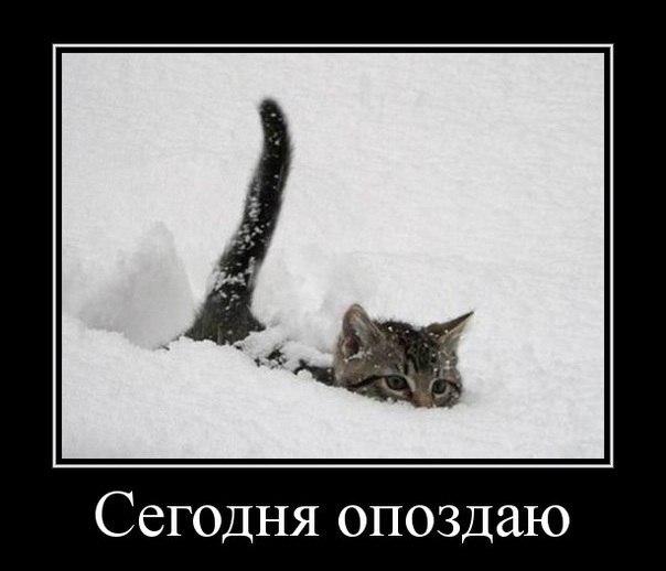 http://cs417519.userapi.com/v417519736/164e/U_AbxLAHVI0.jpg