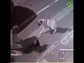 Alpha-katze oder kami-katze? diese hunde haben auf jeden fall ihre lektion gelernt.