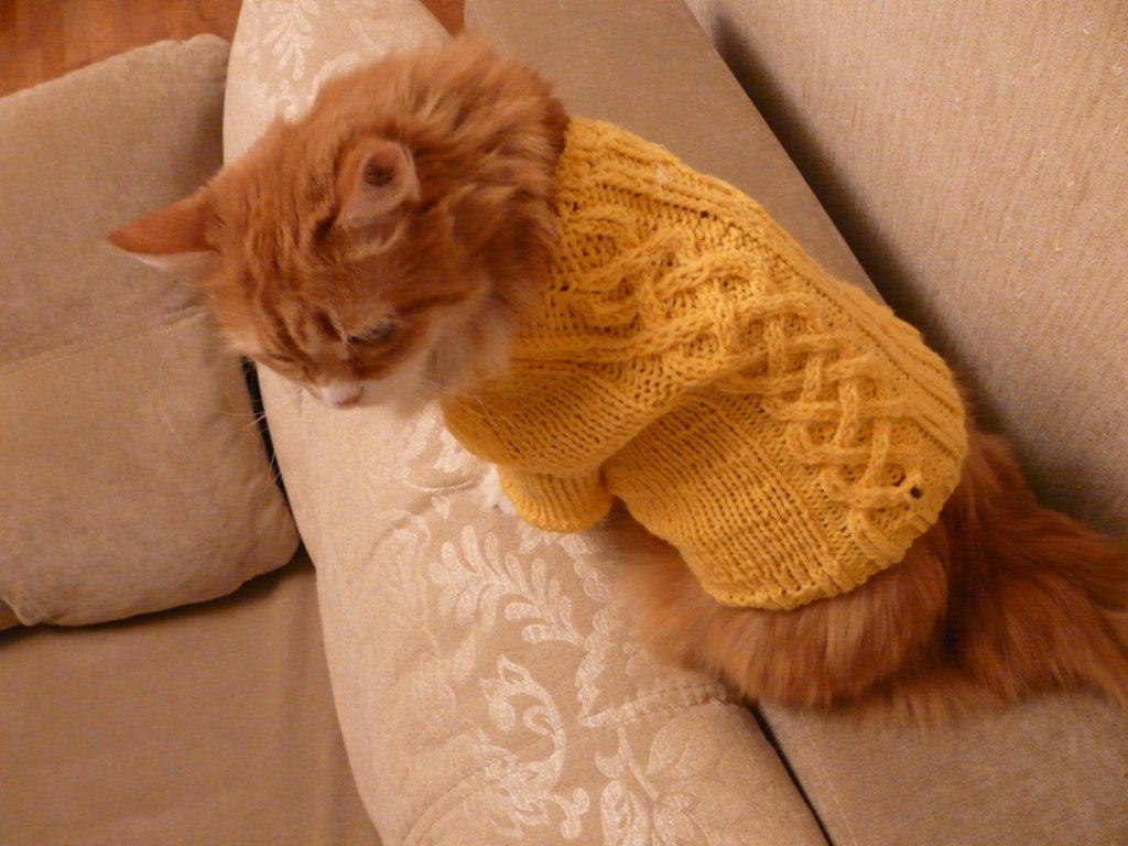 Вязание кофта для кошки 159