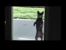 V-s.mobiПриколы, как животные танцуют.Смешное видео..mp4