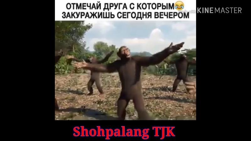 Прикол обезьяны играют на гитаре и танцуют