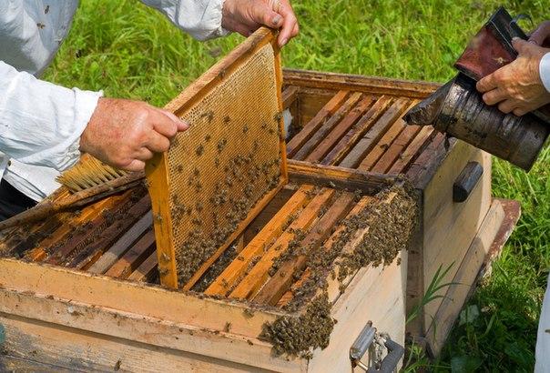 Airbees - Форум пчеловодов • Просмотр темы - Подкормка сахарным
