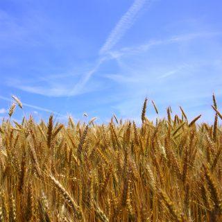 Дача. Огород. Сельское хозяйство.