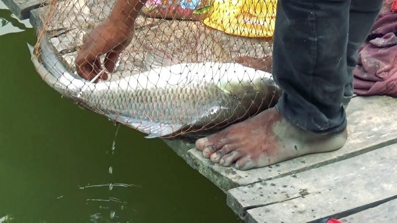 Big Fishing Videos By Fishing Rod Reel