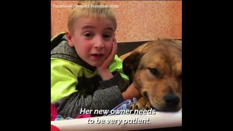 This incredible boy has saved over 800 homeless dogs