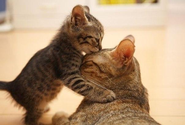 Мамочка, я тебя люблю!
