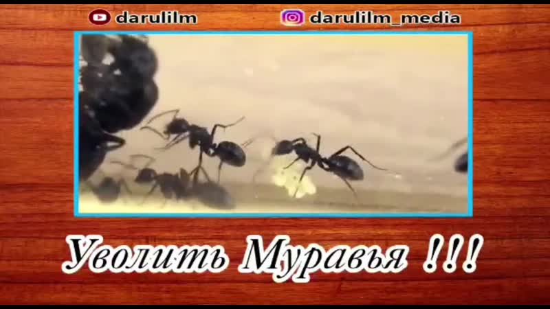 Video-0-04-04-c72d1f4d9edc85737046b6bce02cce37add9f35d462a7069ae175cb8c8a0bf11-V.mp4