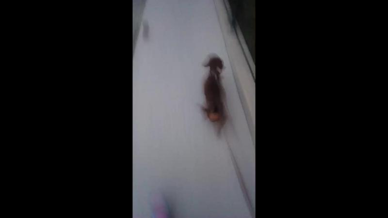 гуляю с собакой