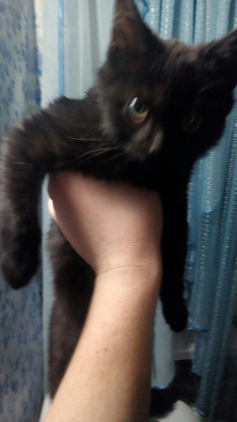 Всем привет, Михайловны. Сегодня прибился кот. Черный, пушистый и нагл