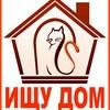 Кошки и котята ищут дом! ©Рыжий Хвост