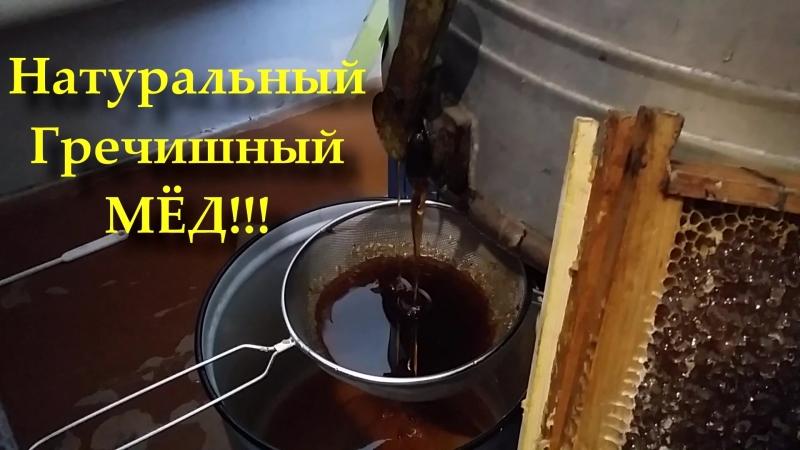 Качаем Славный МЁД!