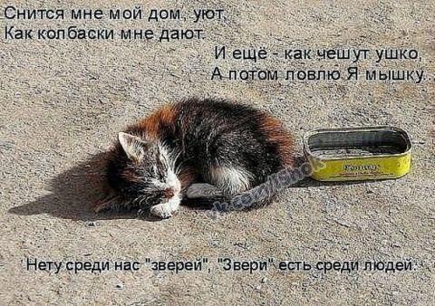 http://cs320516.vk.me/v320516323/14b4/bM1LyeXcvJs.jpg