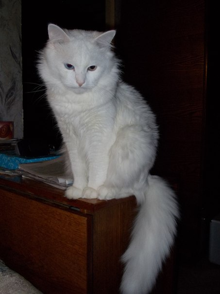 1.0 кот или кошка