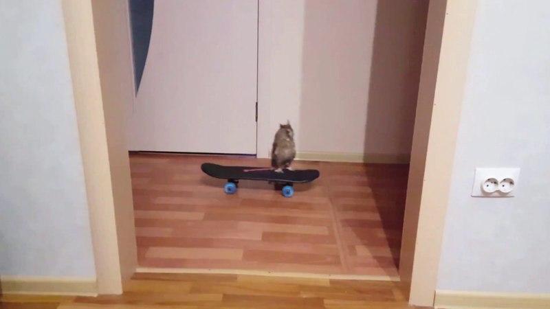 Сова Кёрби скейтбордист / Owl Skateboarder