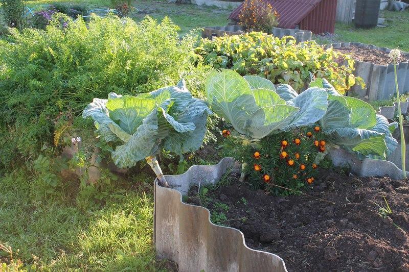 Фотоальбом «Осень - а что в саду и огороде»-Еще много зелени
