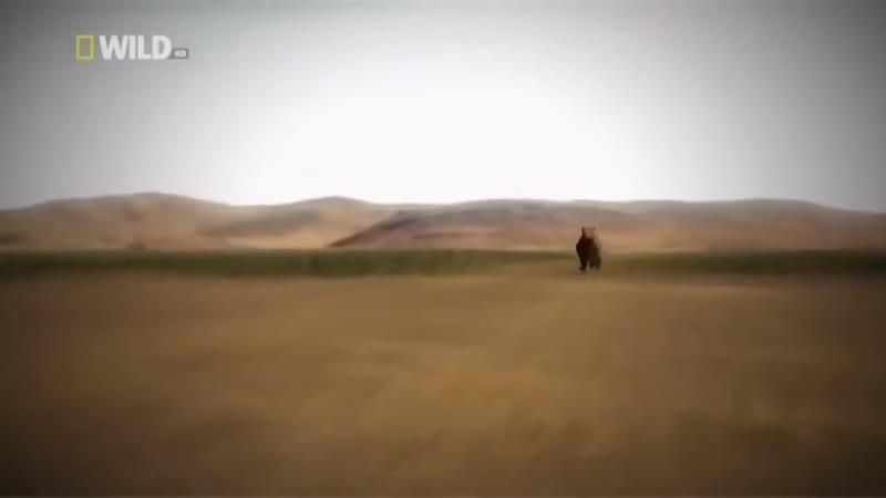 National Geographic - Супер хищники - Лев - Документальный фильм