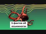 5 фактов об осьминогах