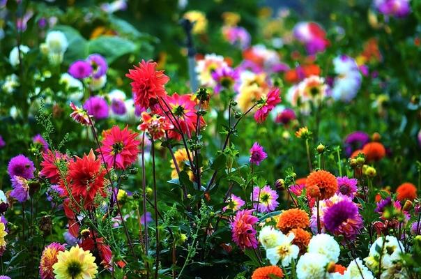 Жизнь и люди  большой сад цветов.