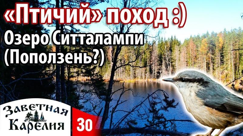Птичий поход на озеро Ситталампи (Поползень). Заветная Карелия