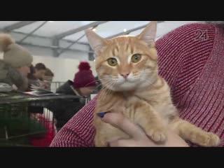 В Казани прошла выставка кошек из приюта