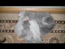 НОВОРОЖДЕННЫЕ КОТЯТА МЯУКАЮТ И ЗОВУТ МАМУ КОШКУ. Самый милый котенок