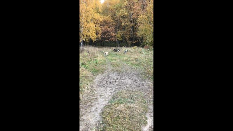 Осенний лес и подопечные Приюта в Щербинке
