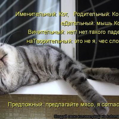 Ника Шадрина, 31 декабря 1998, Верхнеуральск, id148501452