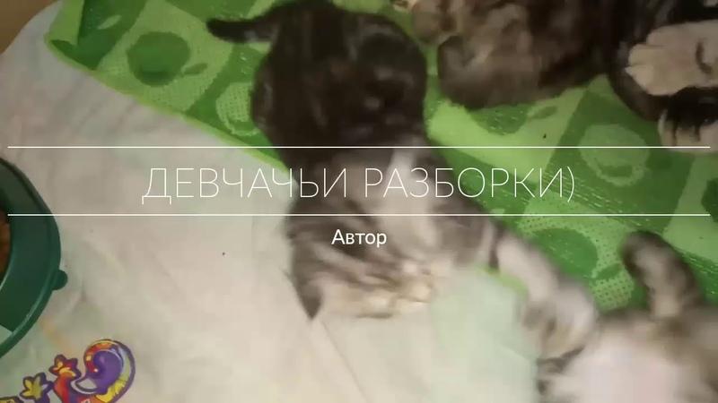 Девчачьи разборки)