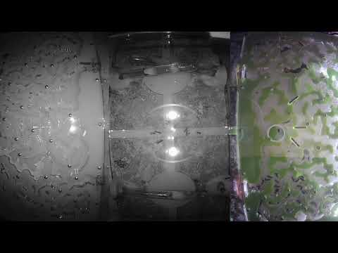 Day 11 [VIDEO x16] Ant wars Муравьиная ферма [ResOfAnts] Муравьи (Camponotus Diacamma) Ants