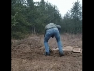 не испугался и спас волка