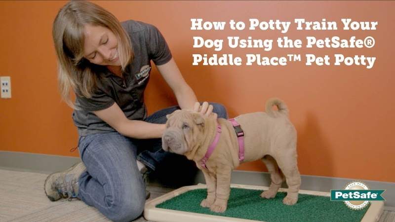 PetSafe How to Potty Train Your Dog Using the PetSafe Piddle Place Pet Potty