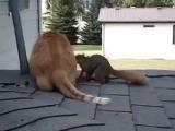 Смешные истории с животными. Кошка и белка