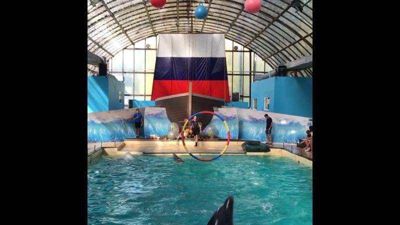 Ростовский дельфинарий Прекрасное шоу