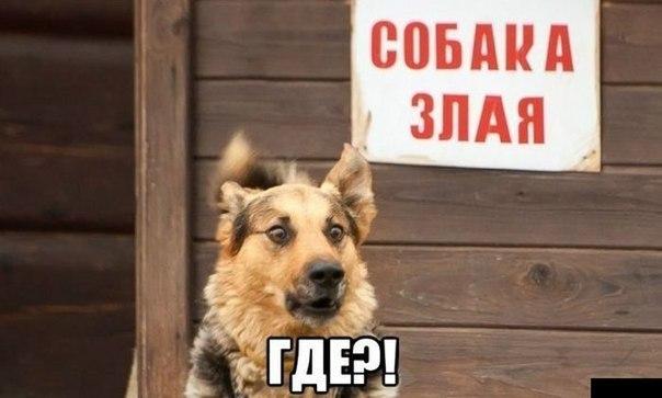 Призываю Россию вывести все свои войска с востока Украины, - генсек НАТО - Цензор.НЕТ 6871