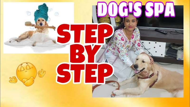 (SUMMER SPECIAL) Dog's SPA - 2 STEP - BY - STEP How to groom a dog