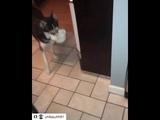 Husky pup drops bowl