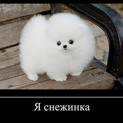 Свытлана Бжылка, 24 июля 1975, Кривой Рог, id205448174