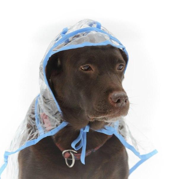 OSSO Fashion - лучшие товары для животных,дрессировки,спорта 2MUYE_u0GRU