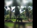 Слоновья ферма и покатушки на квадроциклах в провинции Краби