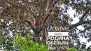 2018. Остров Борнео. Часть 3. По реке Клиас на родину обезьян-носачей Borneo Proboscis Monkey