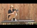 6. Массаж спины и области грудной клеткиребер собаки
