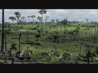 Экологические проблемы человечества, перспективы и последствия -