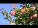 Приход весны – это не столько время года, сколько состояние души.